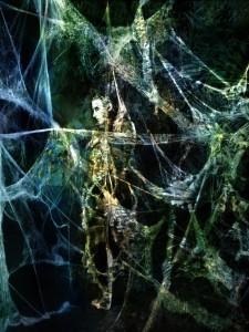 Spiderweb 4